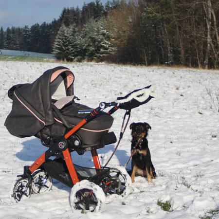 Schnee_Hund