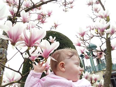 A-Magnolia-Baby_AR